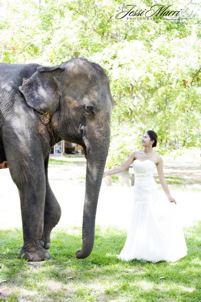 Elephant Bride