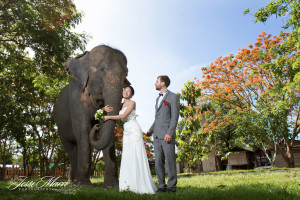 ​David and Tak Thailand Wedding